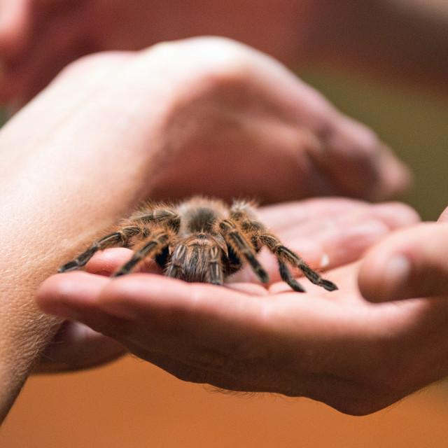 """Tarantula Hand"" stock image"