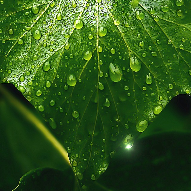 """Rainy day leaf"" stock image"