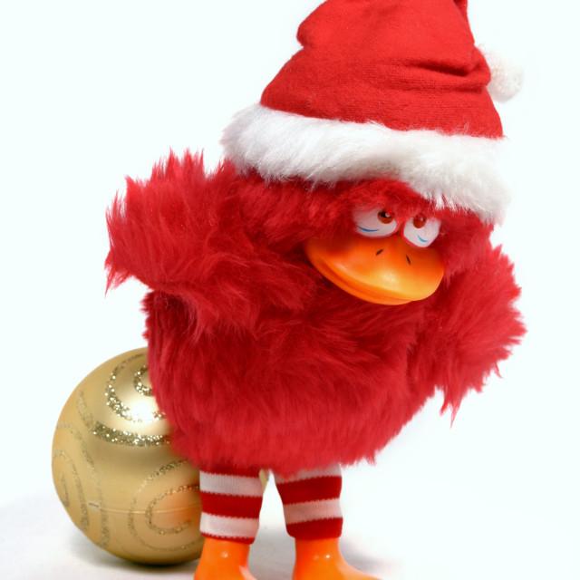 """A Christmas Bird"" stock image"