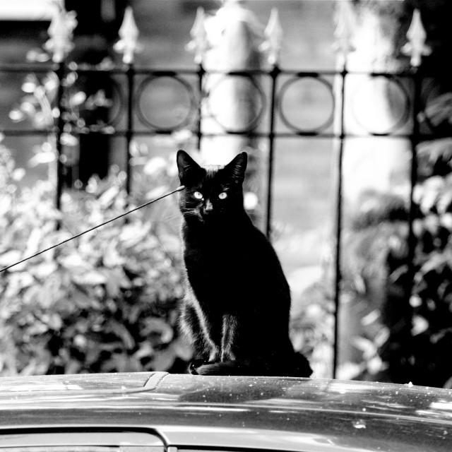 """""""Le Chat Noire"""" stock image"""