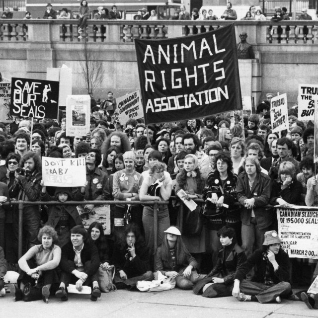 """Animal Rights demonstration, London"" stock image"