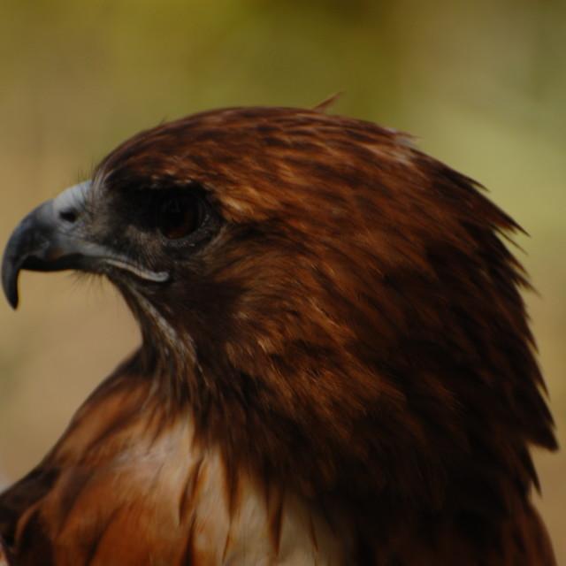 """""""Hawkish"""" stock image"""