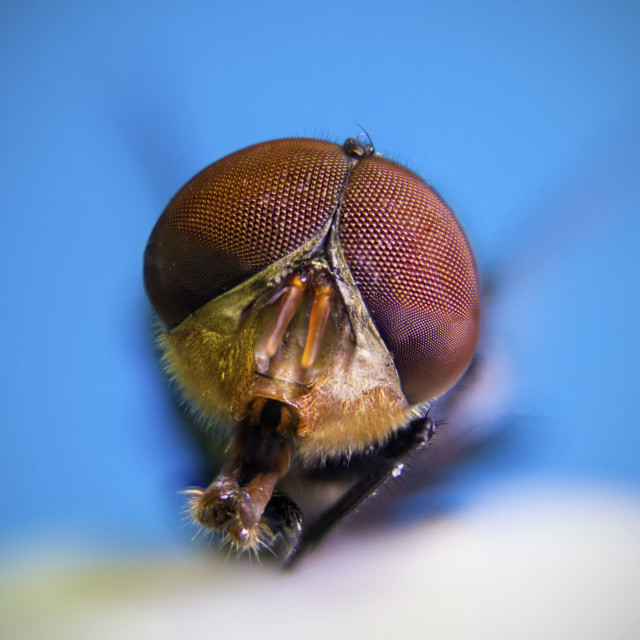 """Macro fly"" stock image"