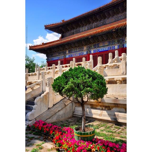 """""""China garden"""" stock image"""
