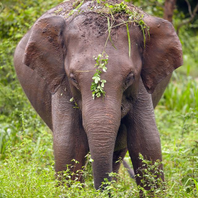 """""""playfull baby elephant"""" stock image"""