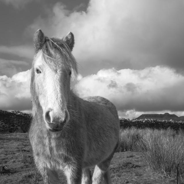 """feeling a little horse"" stock image"