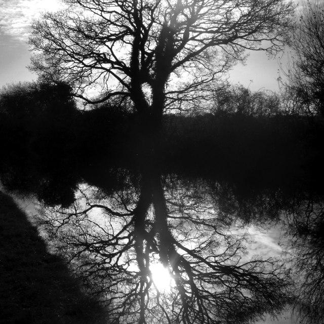 """Tree reflection"" stock image"
