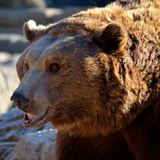 """Big Bear"" stock image"