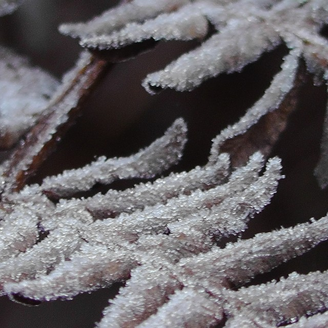 """Frosty Fern"" stock image"
