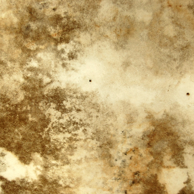 """""""mold texture"""" stock image"""