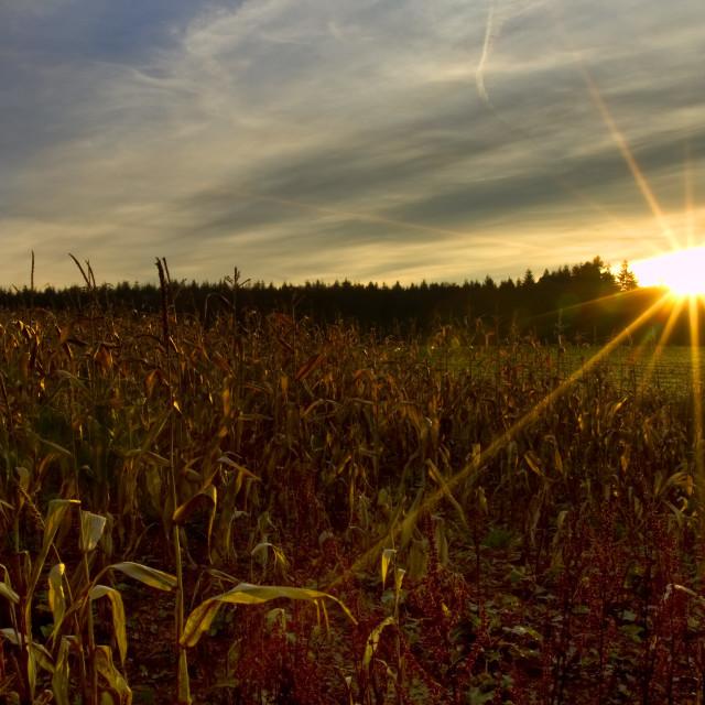 """""""Autumn sunset"""" stock image"""