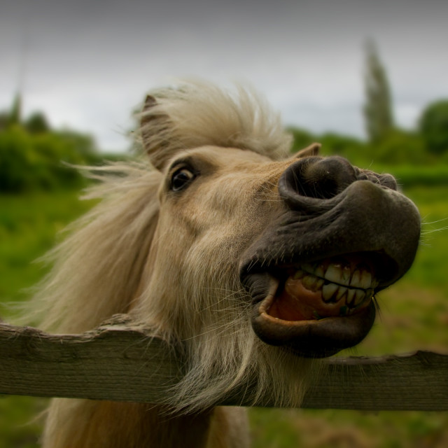 """Funny horse"" stock image"