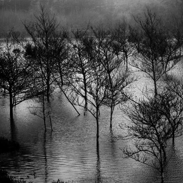 """Foggy lagoon"" stock image"