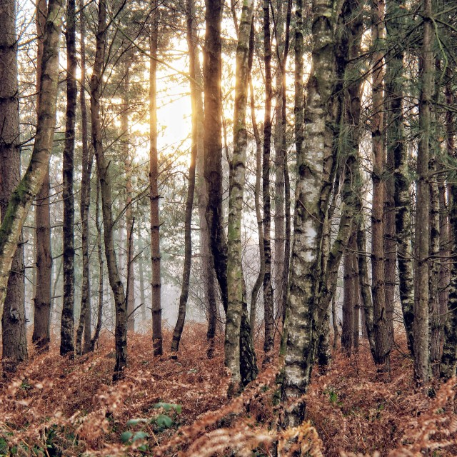 """Gloomy Woodland"" stock image"
