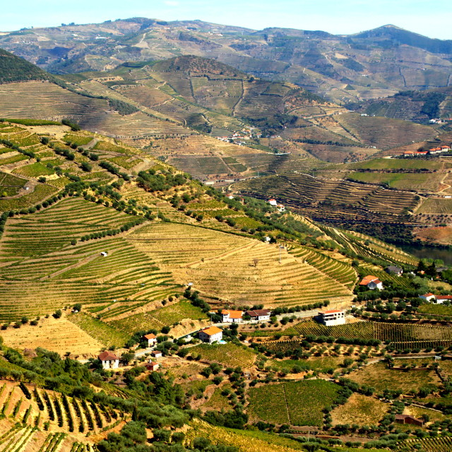 """""""Douro valley, Portugal"""" stock image"""