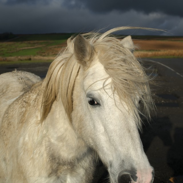 """""""My little pony"""" stock image"""