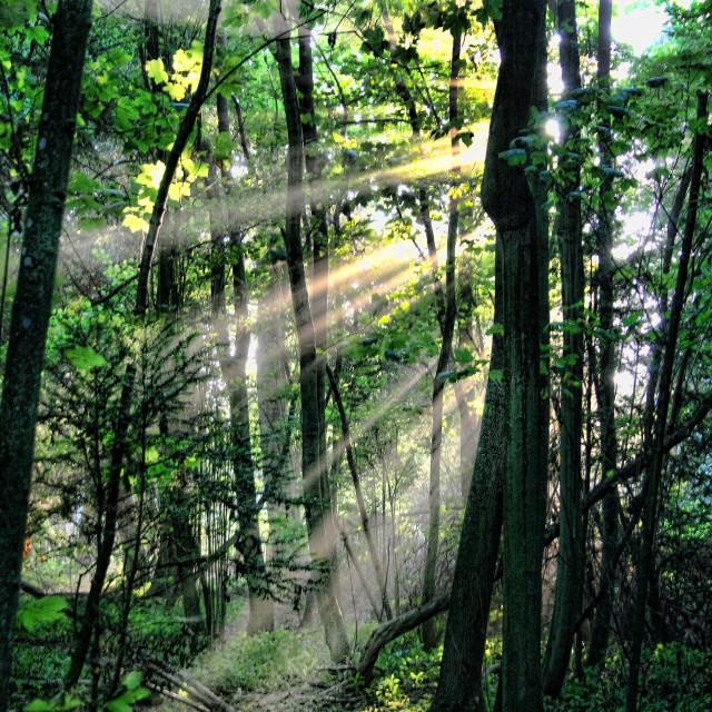 """Sun Through Trees"" stock image"