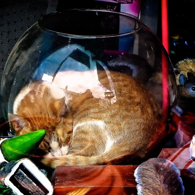 """Ironic Cat"" stock image"