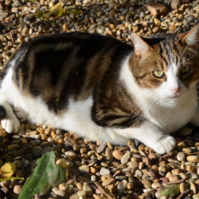 """Fat Cat"" stock image"