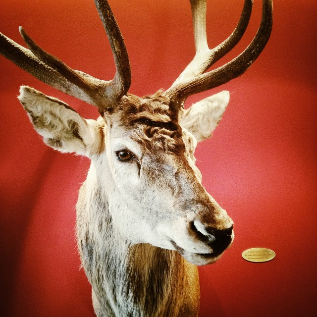 """Deer head"" stock image"