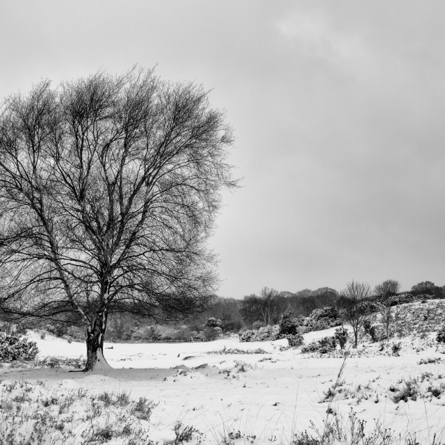 """New Forest in the snow"" stock image"