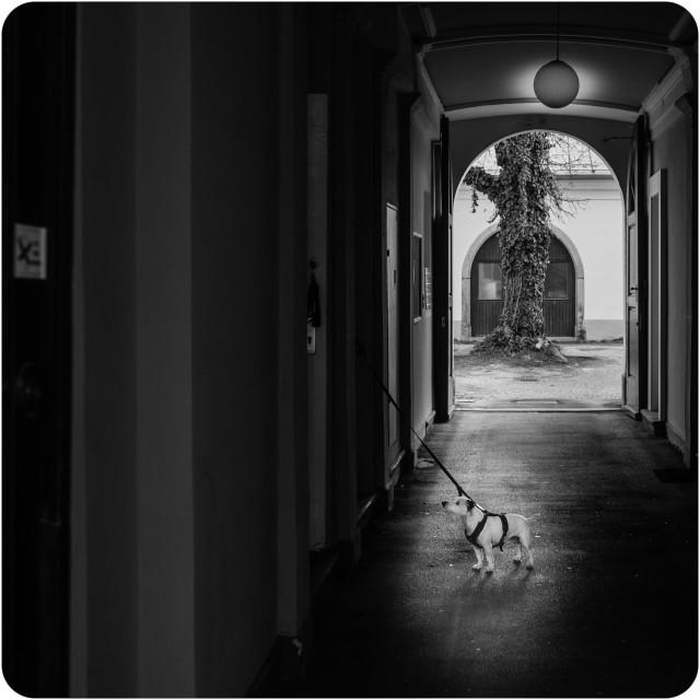 """Dog in a doorway"" stock image"