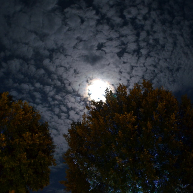 """""""Moon, trees & clouds"""" stock image"""