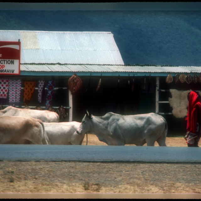 """""""Maasai"""" stock image"""