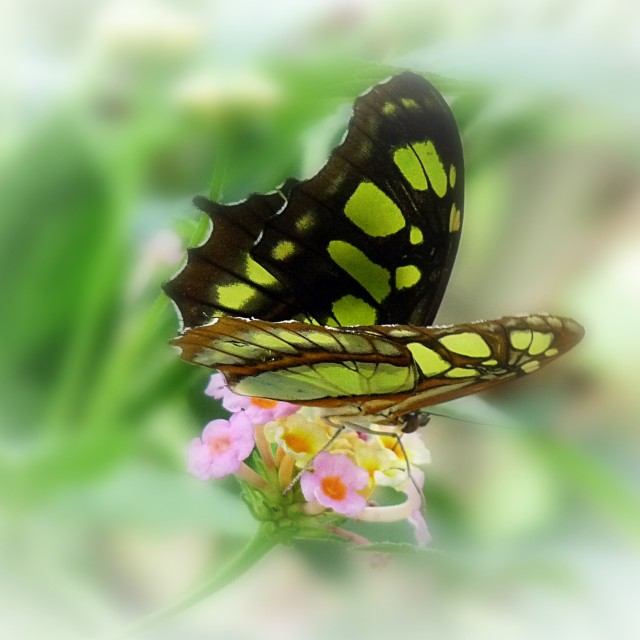 """Tropical Butterfly"" stock image"