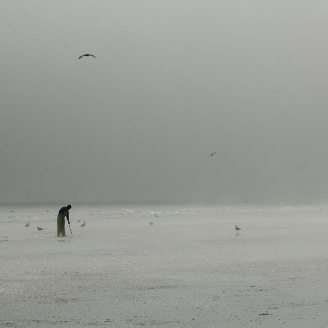 """""""Sea Mist"""" stock image"""