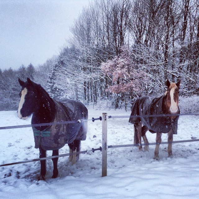 """Horses in the snow"" stock image"