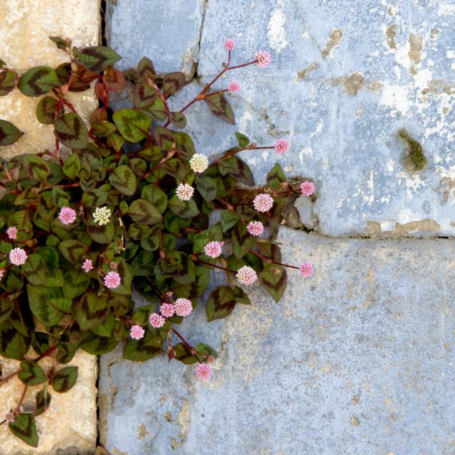 """plant life"" stock image"
