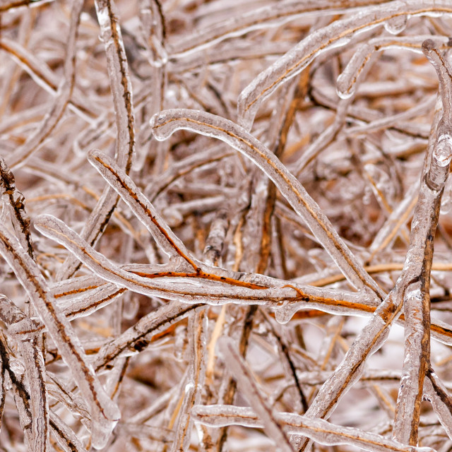 """Icy Branches"" stock image"