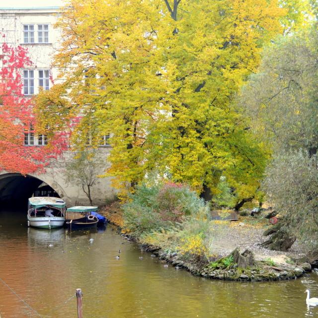 """Autumn Glimpse"" stock image"