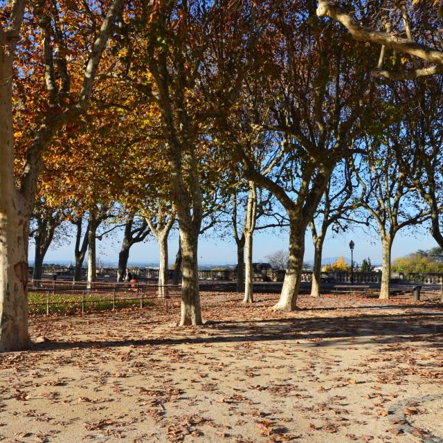 """Fall at Le Peyrou"" stock image"