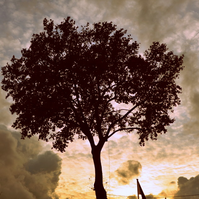 """""""Tree & Clouds"""" stock image"""