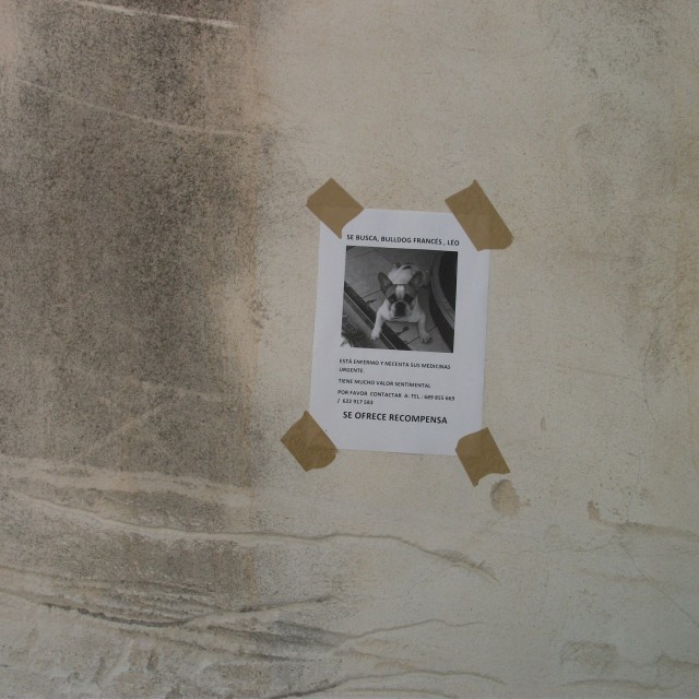 """Lost Spanish Dog"" stock image"