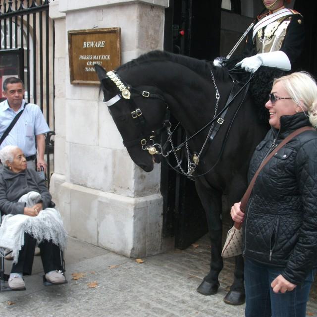"""""""Horse may kick"""" stock image"""
