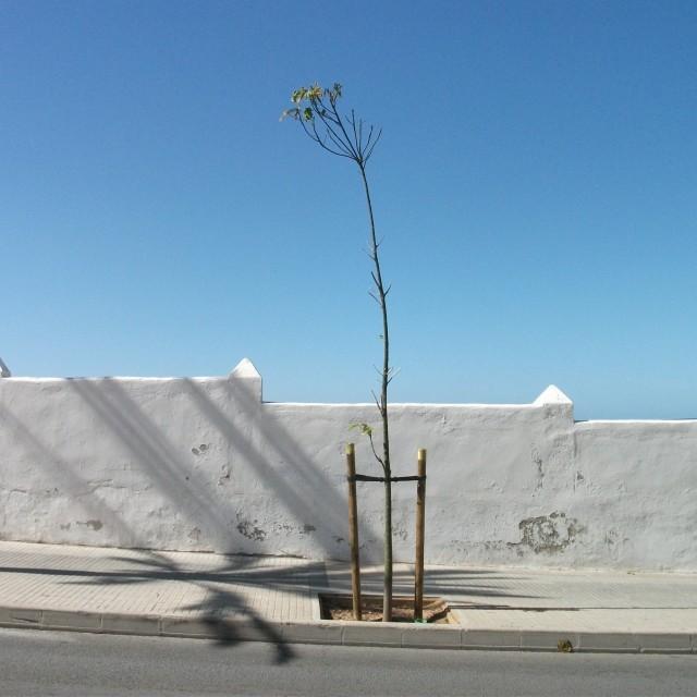"""""""Single tree"""" stock image"""
