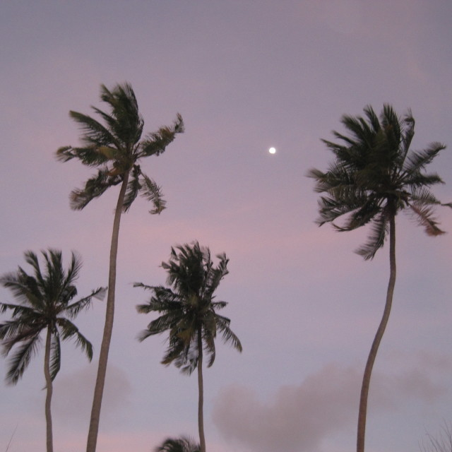 """Palm trees in Zanzibar at sunset"" stock image"