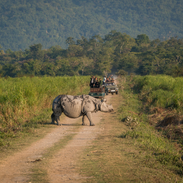 """On safari in Kaziranga, Assam, India"" stock image"