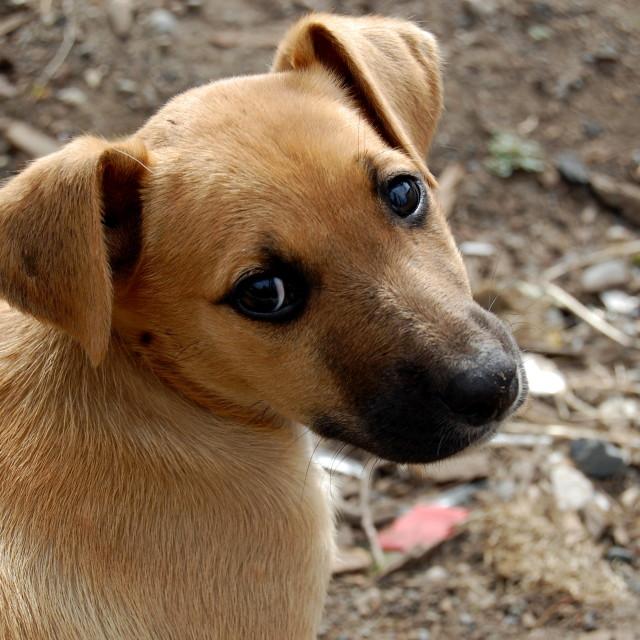 """""""Curious dog"""" stock image"""