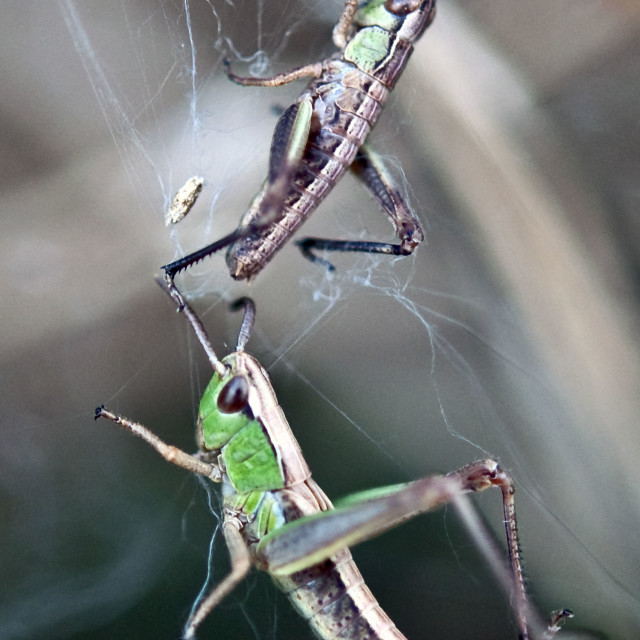 """""""caught in a web"""" stock image"""