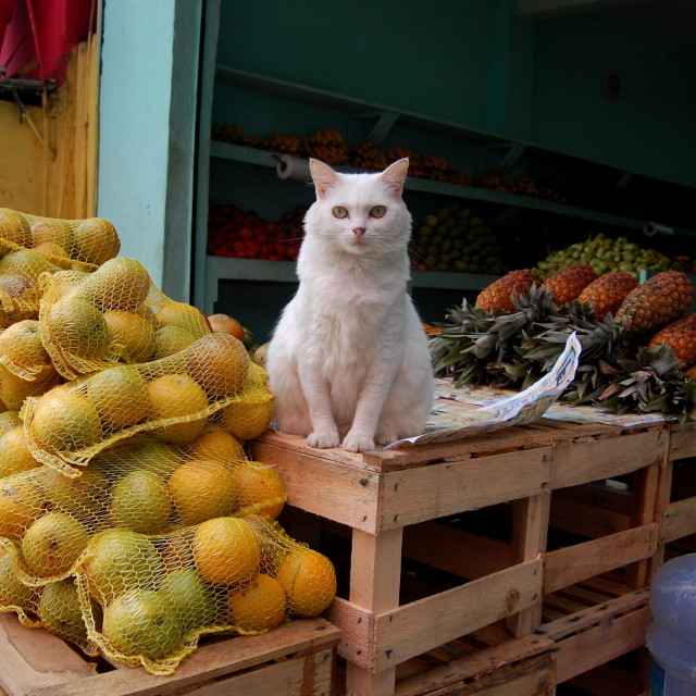 """Cat with fruit"" stock image"