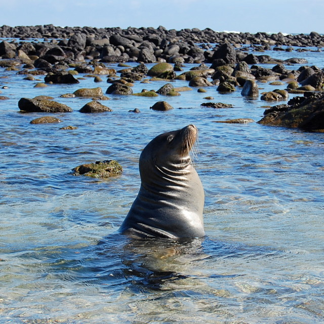 """Sea lion basks in sun"" stock image"