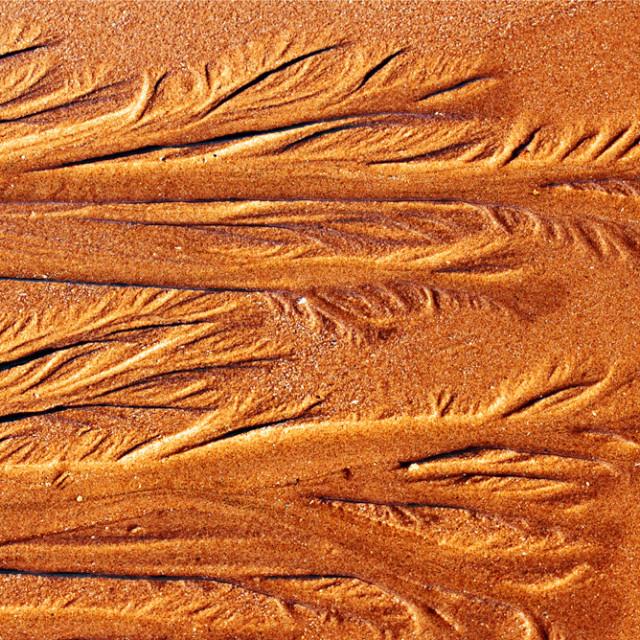 """Sand Ferns"" stock image"