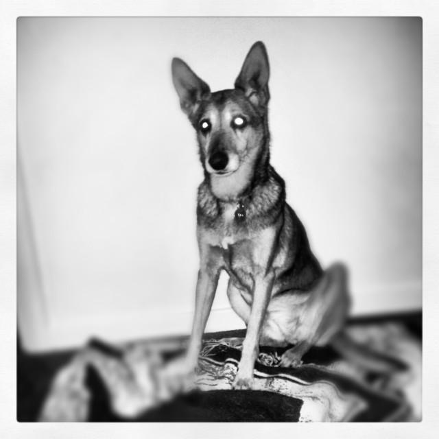 """Tia, my late dog."" stock image"
