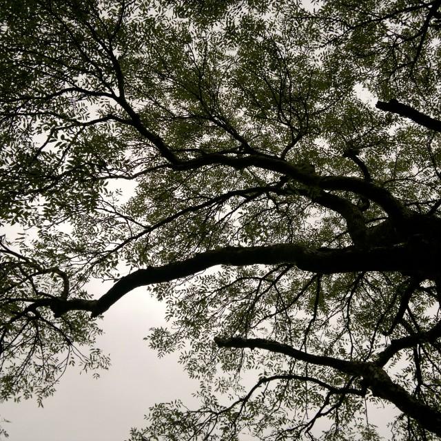 """""""Tree Textures 1"""" stock image"""