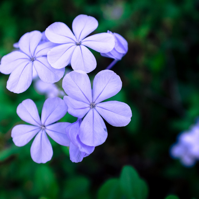 """Delicate petals"" stock image"