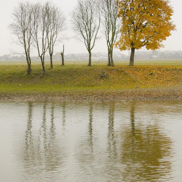 """Tree Study in Autumn"" stock image"